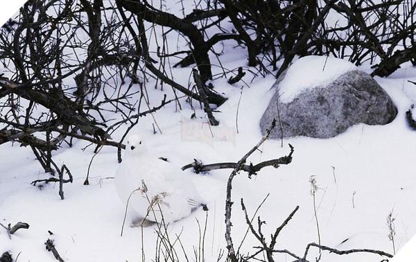 16 em pet ngụy trang còn giỏi hơn cả động vật hoang dã - Ảnh 21.