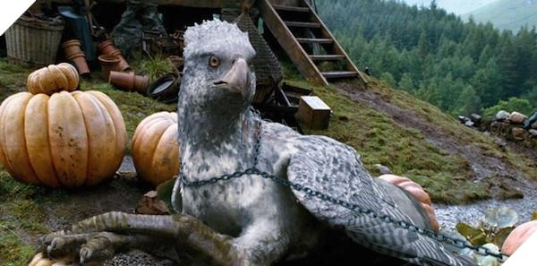 Harry Potter: Wizards Unitecó cả những sinh vật huyền bí, liệu có gặp lạiBuckykhông nhỉ?