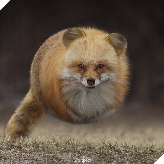 Bộ ảnh Photoshop các loài động vật trở nên tròn vo như bóng bay - Ảnh 7.