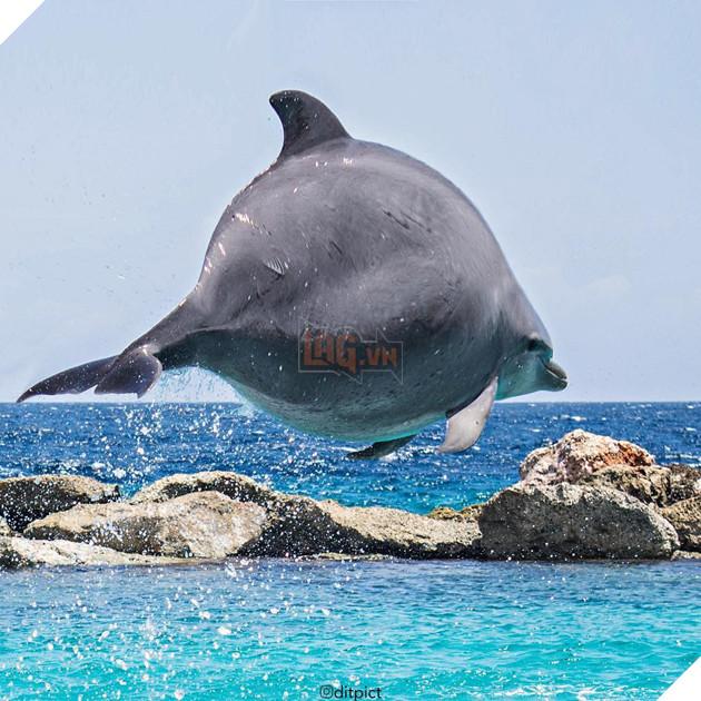 Bộ ảnh Photoshop các loài động vật trở nên tròn vo như bóng bay - Ảnh 15.