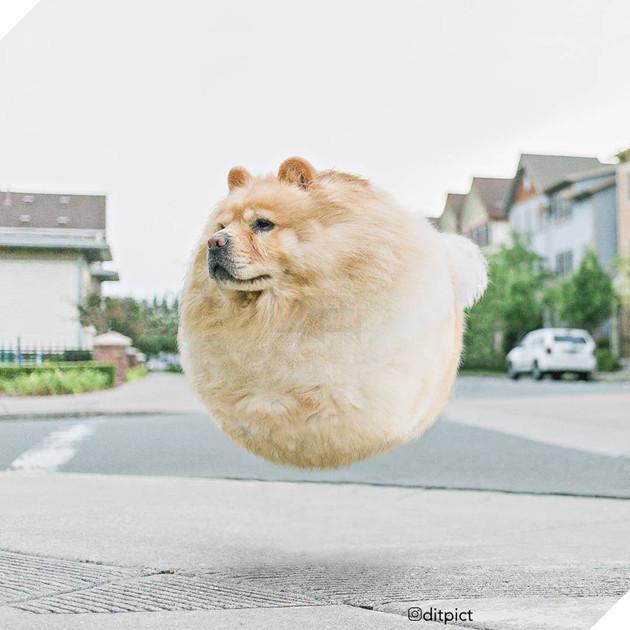 Bộ ảnh Photoshop các loài động vật trở nên tròn vo như bóng bay - Ảnh 17.