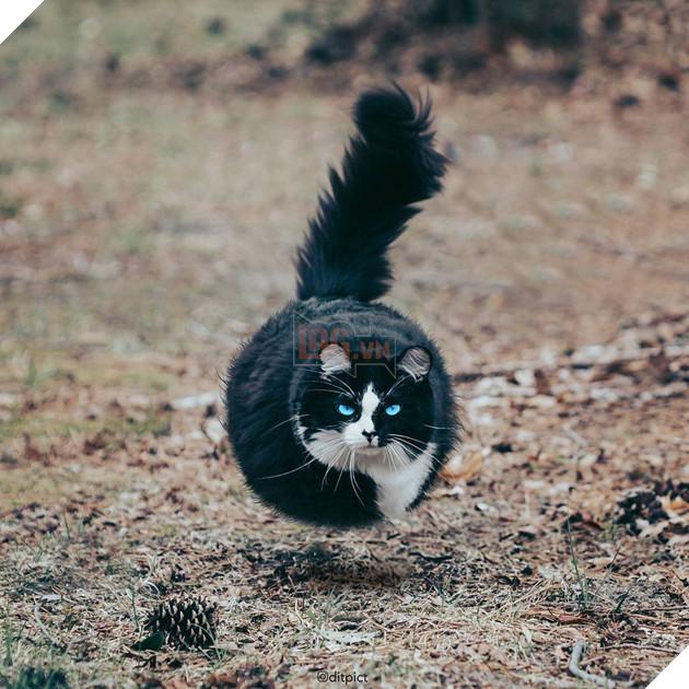 Bộ ảnh Photoshop các loài động vật trở nên tròn vo như bóng bay - Ảnh 21.