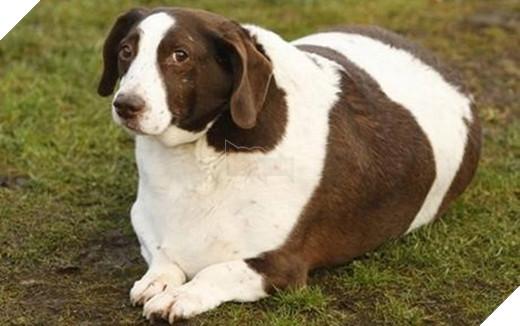 Nhìn gì? Chưa thấy cún vừa mập vừa đẹp bao giờ à?