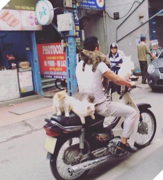 Chủ đi làm, cả đàn chó mèo đánh đu trên xe máy đi cùng cho vui - Ảnh 3.