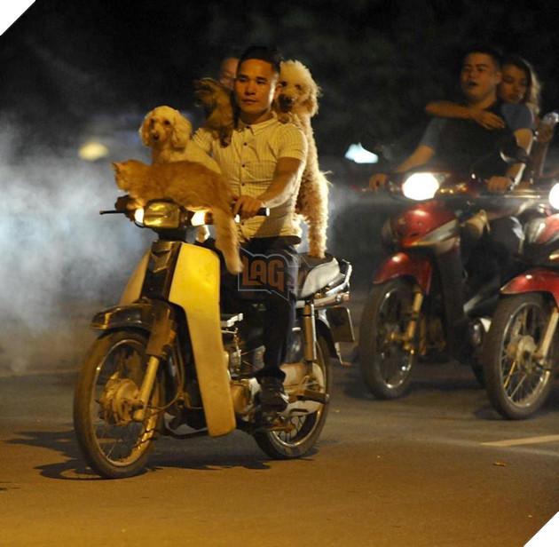Chủ đi làm, cả đàn chó mèo đánh đu trên xe máy đi cùng cho vui - Ảnh 7.