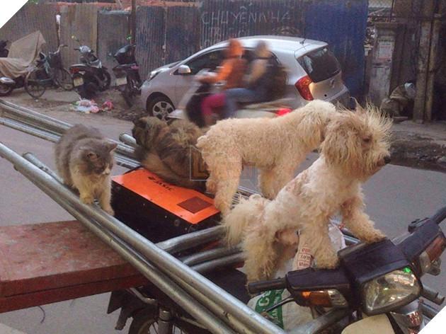 Chủ đi làm, cả đàn chó mèo đánh đu trên xe máy đi cùng cho vui - Ảnh 5.