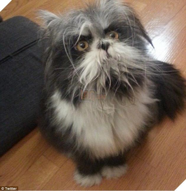 Cư dân mạng cãi nhau ỏm tỏi vì không biết con vật lắm lông này là chó hay mèo - Ảnh 1.