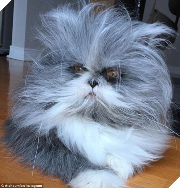 Cư dân mạng cãi nhau ỏm tỏi vì không biết con vật lắm lông này là chó hay mèo - Ảnh 5.