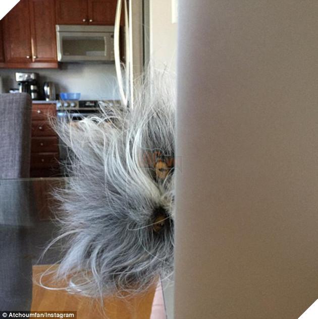 Cư dân mạng cãi nhau ỏm tỏi vì không biết con vật lắm lông này là chó hay mèo - Ảnh 4.