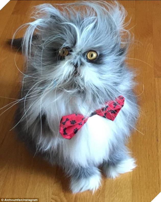 Cư dân mạng cãi nhau ỏm tỏi vì không biết con vật lắm lông này là chó hay mèo - Ảnh 3.