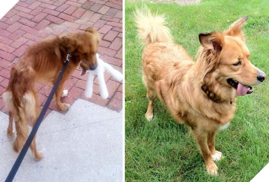 Sự thay đổi kỳ diệu của những thú cưng vô gia cư sau khi được nhận nuôi - Ảnh 3.