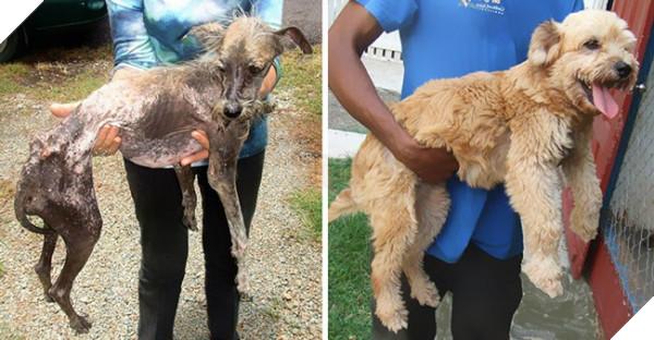 Sự thay đổi kỳ diệu của những thú cưng vô gia cư sau khi được nhận nuôi - Ảnh 5.