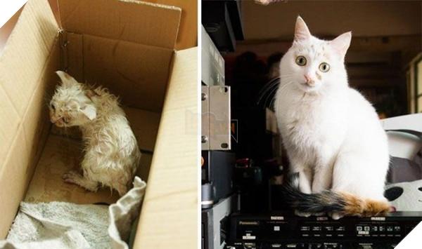 Sự thay đổi kỳ diệu của những thú cưng vô gia cư sau khi được nhận nuôi - Ảnh 7.