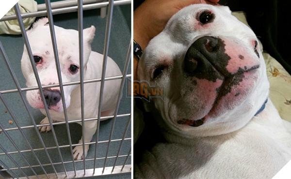 Sự thay đổi kỳ diệu của những thú cưng vô gia cư sau khi được nhận nuôi - Ảnh 11.