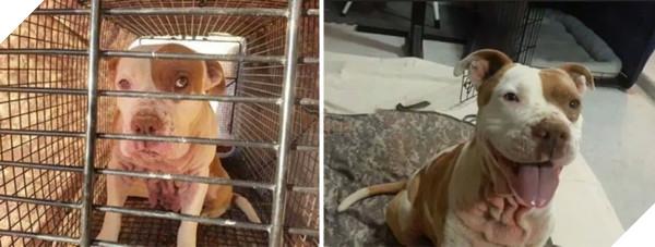Sự thay đổi kỳ diệu của những thú cưng vô gia cư sau khi được nhận nuôi - Ảnh 13.