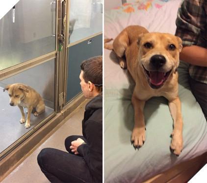 Sự thay đổi kỳ diệu của những thú cưng vô gia cư sau khi được nhận nuôi - Ảnh 15.