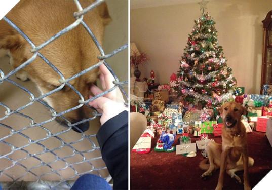 Sự thay đổi kỳ diệu của những thú cưng vô gia cư sau khi được nhận nuôi - Ảnh 17.