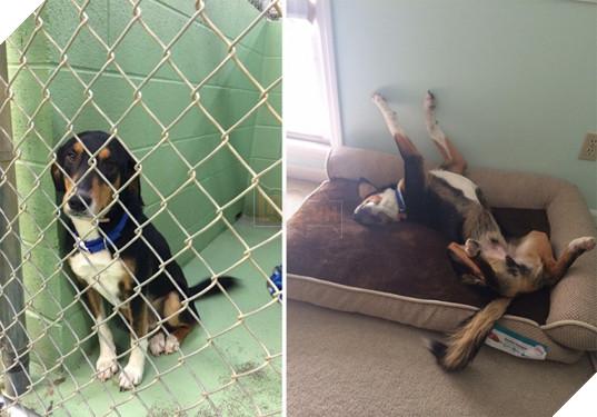 Sự thay đổi kỳ diệu của những thú cưng vô gia cư sau khi được nhận nuôi - Ảnh 19.
