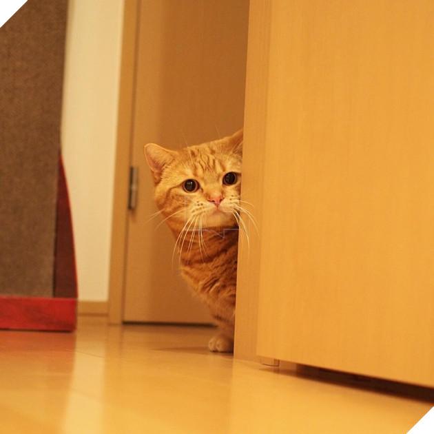 Cả thế giới ra mà xem cặp mèo chân ngắn một mẩu đốn tim cư dân mạng - Ảnh 12.