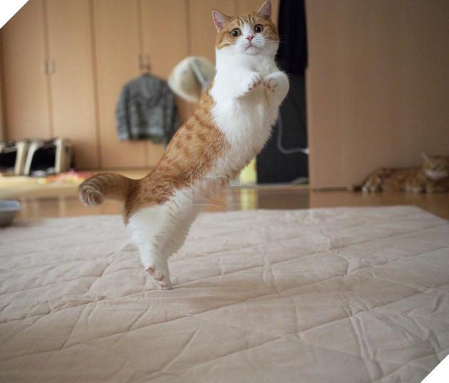 Cả thế giới ra mà xem cặp mèo chân ngắn một mẩu đốn tim cư dân mạng - Ảnh 7.