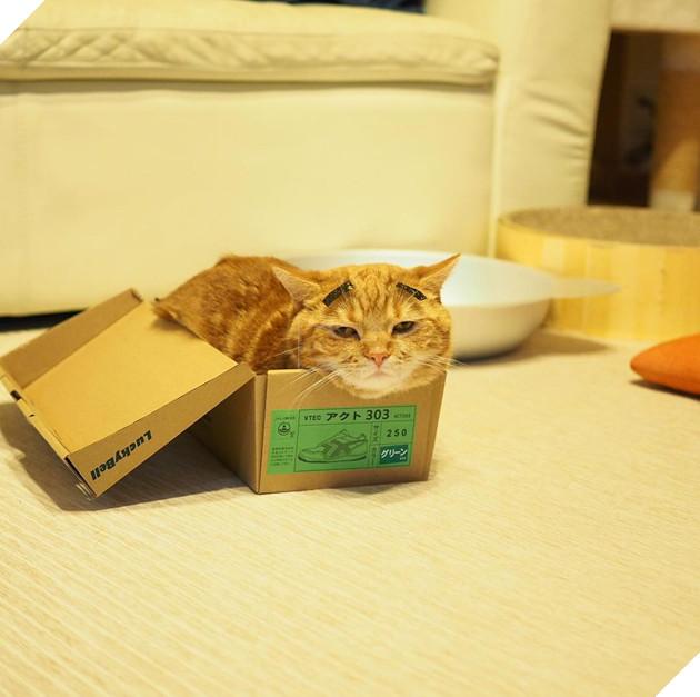 Cả thế giới ra mà xem cặp mèo chân ngắn một mẩu đốn tim cư dân mạng - Ảnh 9.