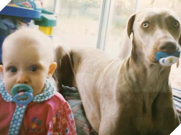 17 chú chó lớn đùng rồi mà vẫn không chịu cai ti giả - Ảnh 17.