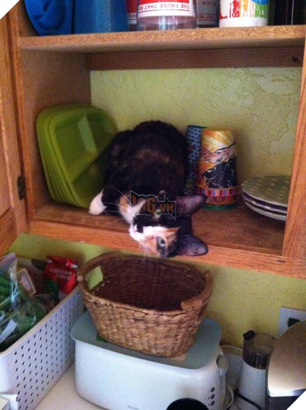 15 bằng chứng cho thấy mèo chính là đám phiền toái nhất trần đời - Ảnh 13.