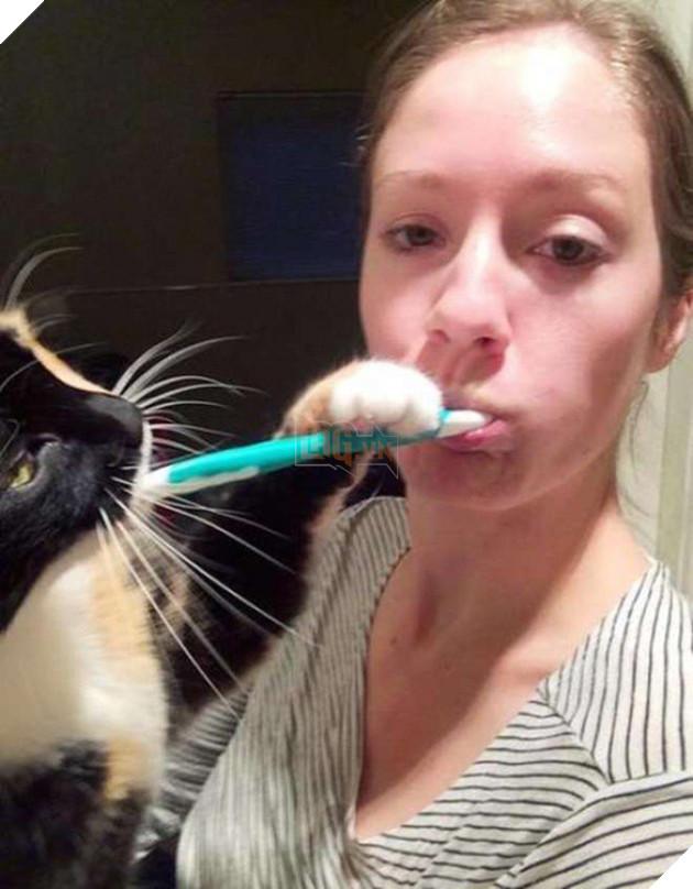 15 bằng chứng cho thấy mèo chính là đám phiền toái nhất trần đời - Ảnh 23.