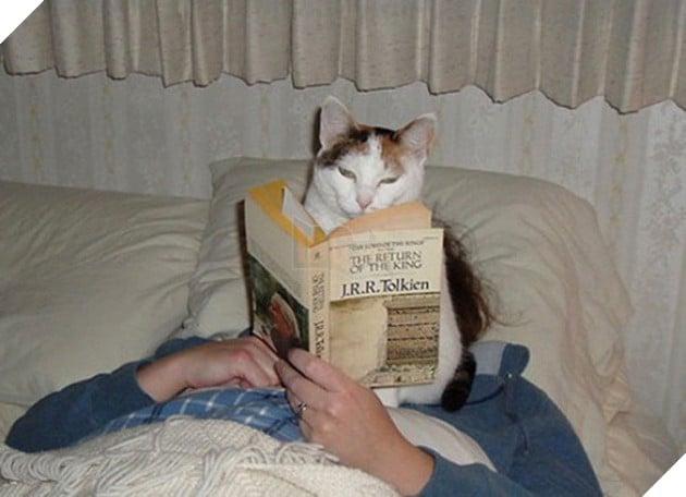 15 bằng chứng cho thấy mèo chính là đám phiền toái nhất trần đời - Ảnh 27.