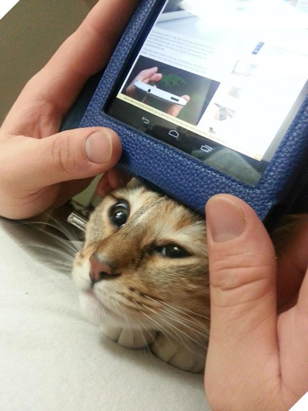 15 bằng chứng cho thấy mèo chính là đám phiền toái nhất trần đời - Ảnh 29.