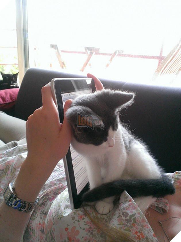 15 bằng chứng cho thấy mèo chính là đám phiền toái nhất trần đời - Ảnh 5.