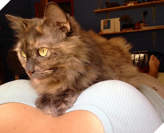15 bằng chứng cho thấy mèo chính là đám phiền toái nhất trần đời - Ảnh 11.