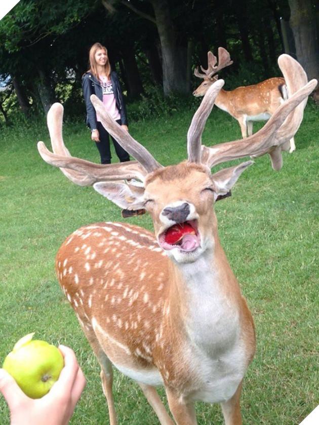 14 bé động vật cũng biết tạo dáng chụp ảnh sống ảo như ai - Ảnh 1.