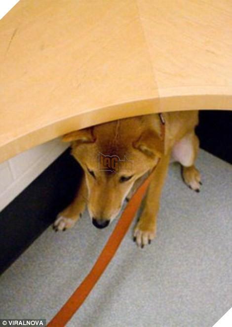 Khuôn mặt đáng thương của 15 chú chó cứ bảo đi bác sĩ là sợ chết khiếp - Ảnh 27.