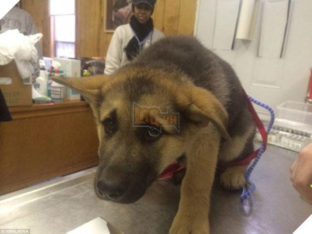Khuôn mặt đáng thương của 15 chú chó cứ bảo đi bác sĩ là sợ chết khiếp - Ảnh 15.