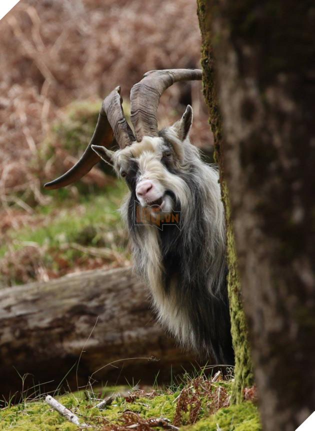 Nỗi khổ của 12 loài động vật bị các thợ chế ảnh lôi ra làm trò cười - Ảnh 9.
