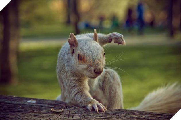 Nỗi khổ của 12 loài động vật bị các thợ chế ảnh lôi ra làm trò cười - Ảnh 13.