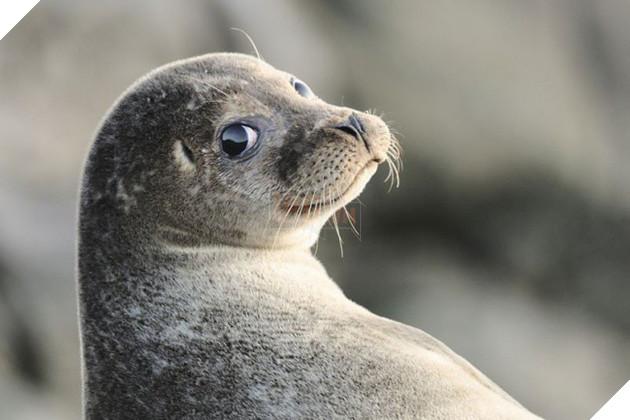 Nỗi khổ của 12 loài động vật bị các thợ chế ảnh lôi ra làm trò cười - Ảnh 25.