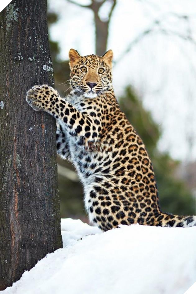 Nỗi khổ của 12 loài động vật bị các thợ chế ảnh lôi ra làm trò cười - Ảnh 33.