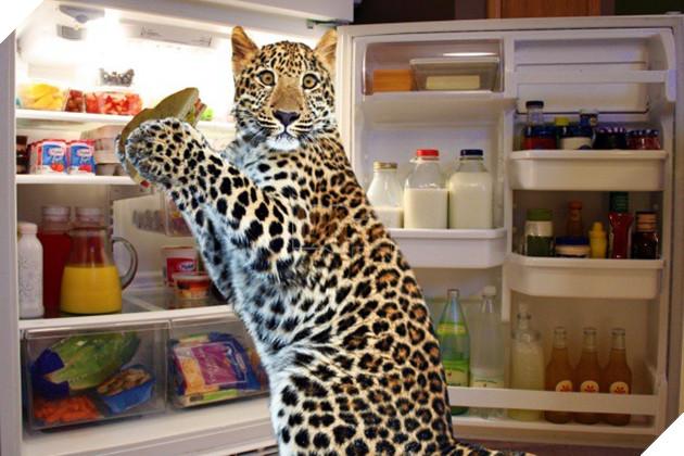 Nỗi khổ của 12 loài động vật bị các thợ chế ảnh lôi ra làm trò cười - Ảnh 35.