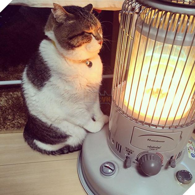 Phải lòng phải mặt với cái máy sưởi, chú mèo béo cứ ôm chặt mãi không rời - Ảnh 1.