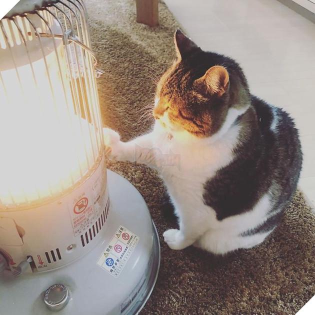 Phải lòng phải mặt với cái máy sưởi, chú mèo béo cứ ôm chặt mãi không rời - Ảnh 3.