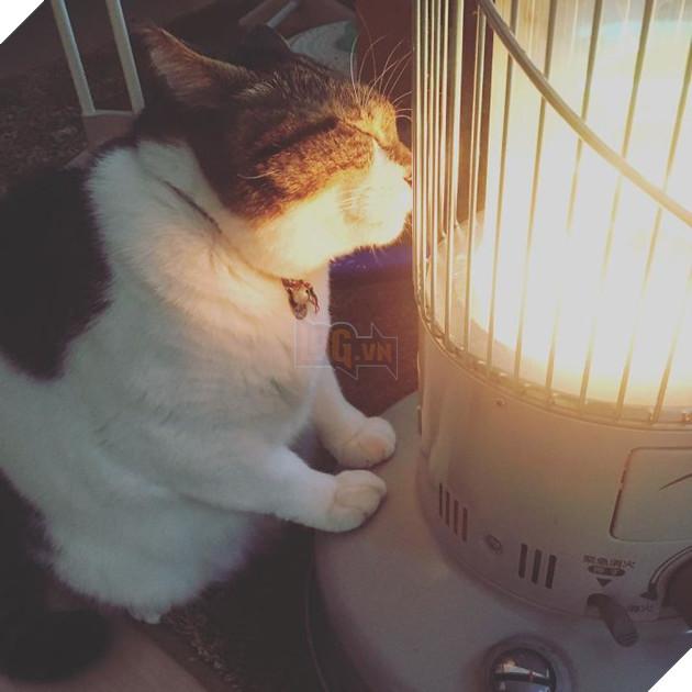 Phải lòng phải mặt với cái máy sưởi, chú mèo béo cứ ôm chặt mãi không rời - Ảnh 5.