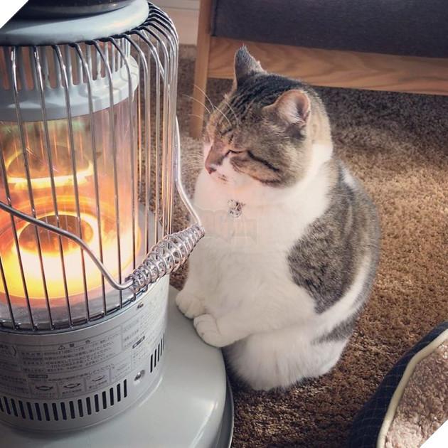Phải lòng phải mặt với cái máy sưởi, chú mèo béo cứ ôm chặt mãi không rời - Ảnh 7.