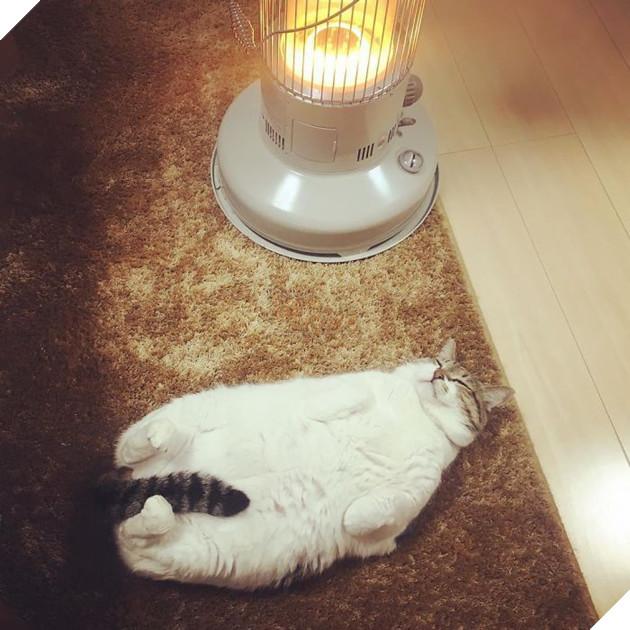 Phải lòng phải mặt với cái máy sưởi, chú mèo béo cứ ôm chặt mãi không rời - Ảnh 15.