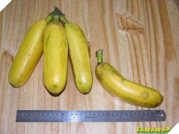 Bananacoin - Đồng tiền chuối, có trị giá bằng 1 cân chuối - Ảnh 5.