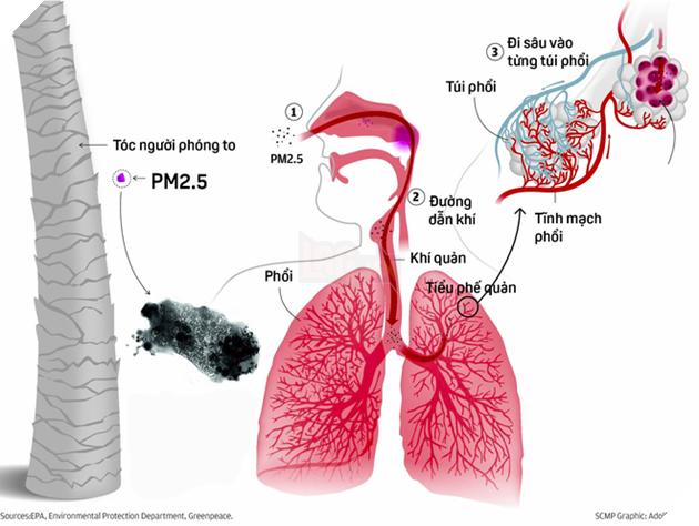 Bụi PM2.5 có thể thẩm thấu vào máu thông qua đường hít thở
