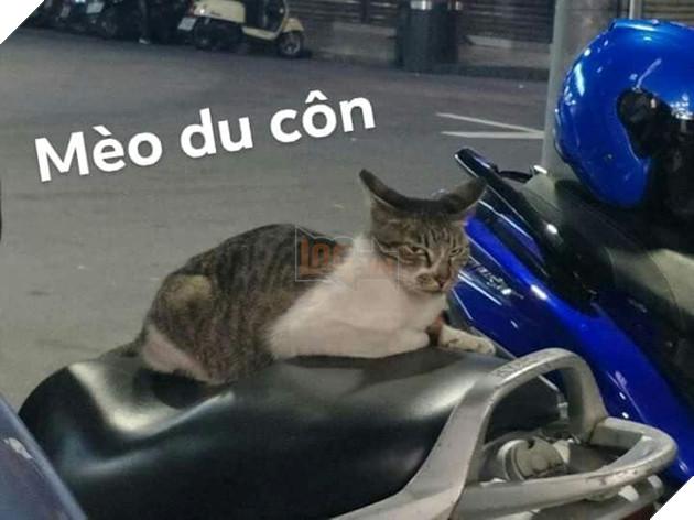 Bộ ảnh tổng hợp những biểu cảm khó đỡ của mèo khiến cộng đồng mạng phát cuồng  2