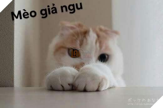 Bộ ảnh tổng hợp những biểu cảm khó đỡ của mèo khiến cộng đồng mạng phát cuồng  5
