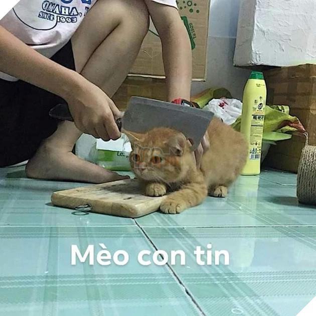 Bộ ảnh tổng hợp những biểu cảm khó đỡ của mèo khiến cộng đồng mạng phát cuồng  6